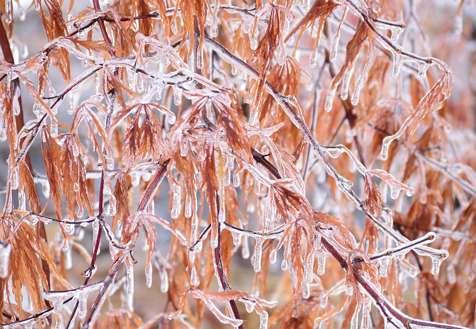 Ice, Branches, Winter, Storm, Nature, Frozen