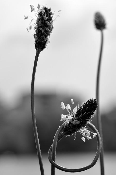 Nature, Knot, Plant, Strange