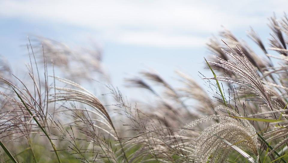 Grass, S, Nature, Rural Areas, Straw, Plants, Reed
