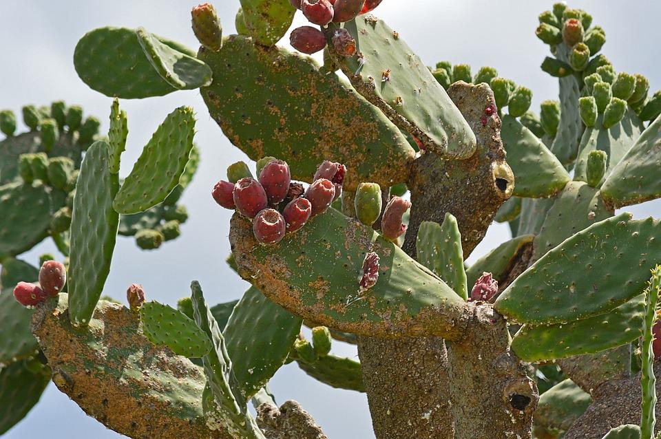 Decay, Cactus, Green, Plant, Nature, Succulent