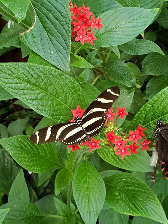 Beautiful, Nature, Butterfly, Summer, Animals