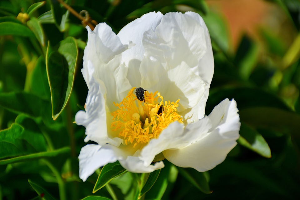 Flower, Insect, Bee, Nature, Summer, Nectar, Spring