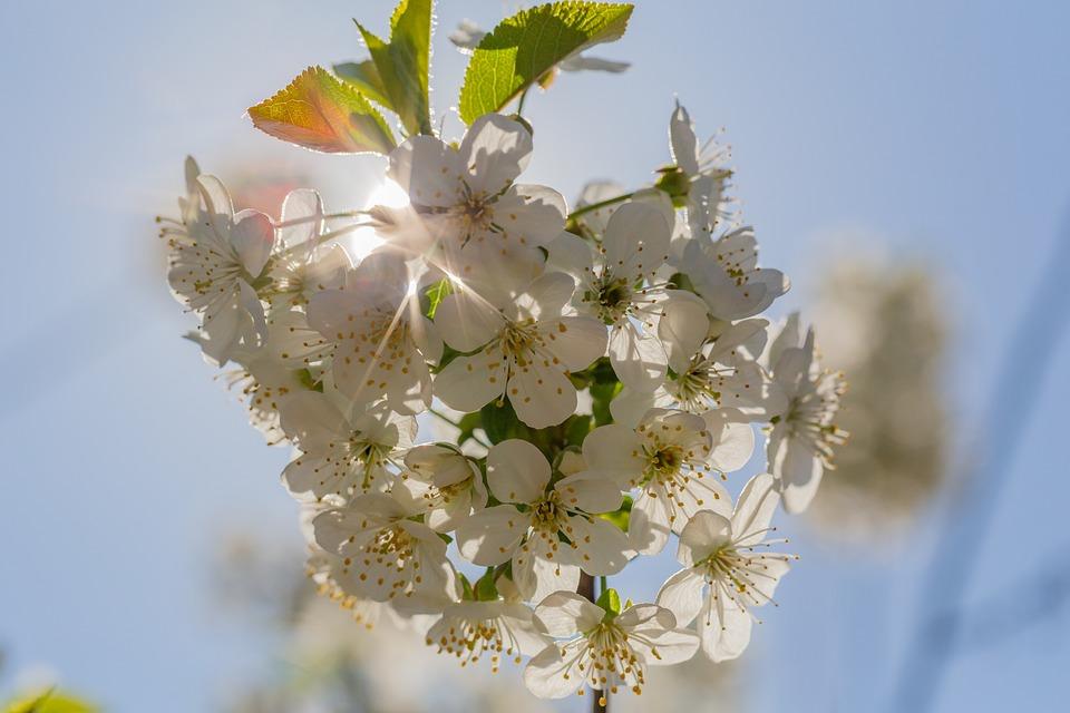 Bleed, Sun, Spring, Nature, Summer, Flower, Flora