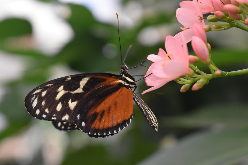Butterfly, Flower, Pink, Orange, Insect, Nature, Summer