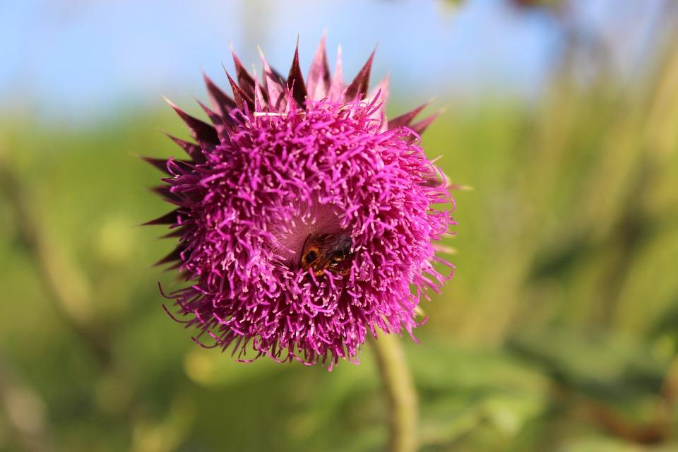Nature, Flora, Flower, Summer, Field, Outdoors, Closeup