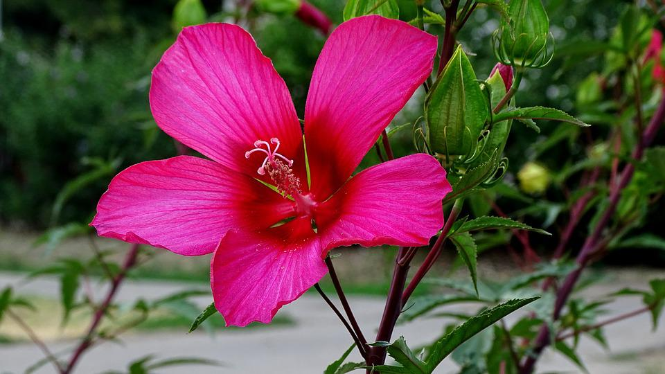 Summer Flower, Beauty, Nature, Flower, Flowers, World