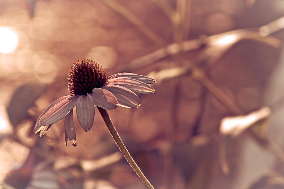 Flower, Nature, Flora, Outdoors, Garden, Summer, Season