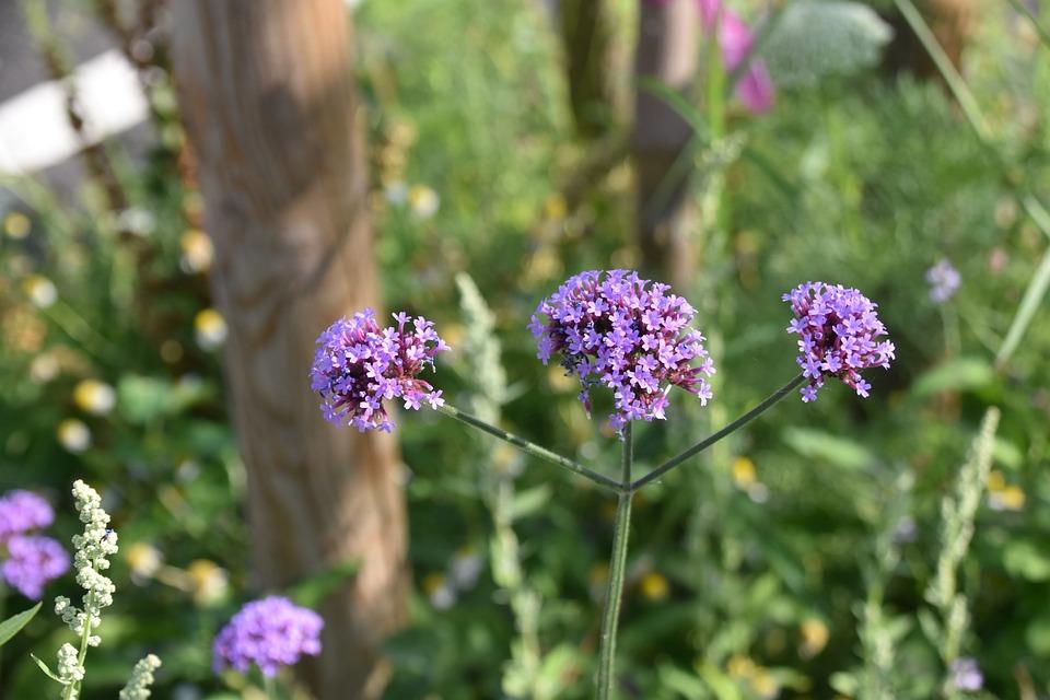 Flowers, Botany, Nature, Summer Flowering