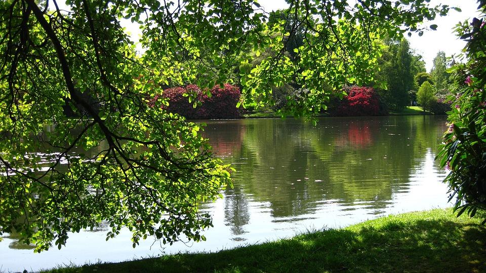 Nature, Tree, Summer, Water, Landscape, Lake