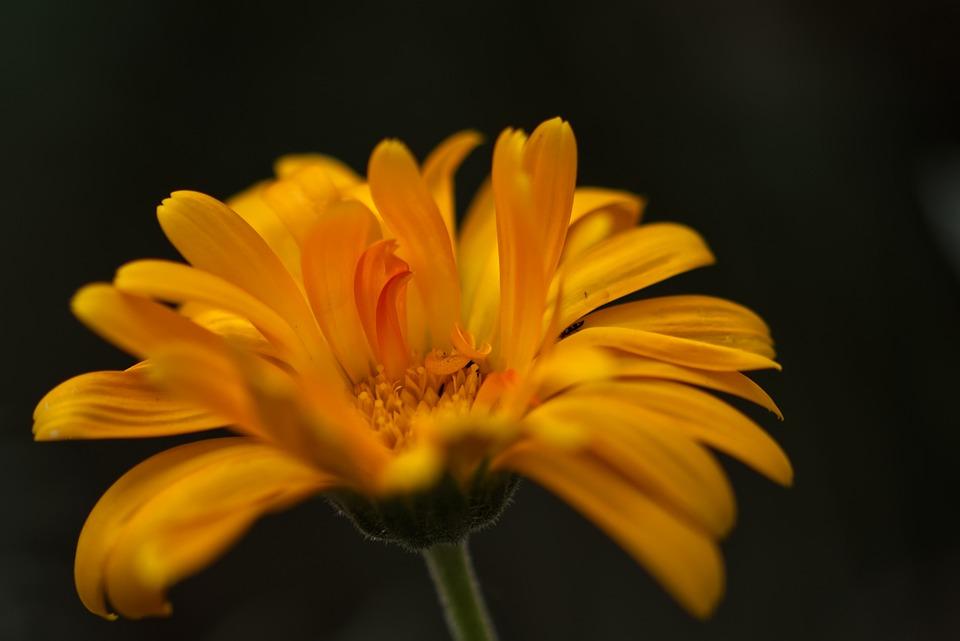 Flower, Blossom, Bloom, Nature, Plant, Petals, Summer