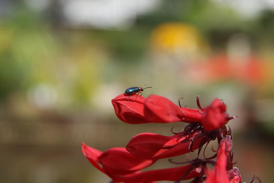 Bokeh, Flower, Bug, Red, Nature, Outdoors, Summer