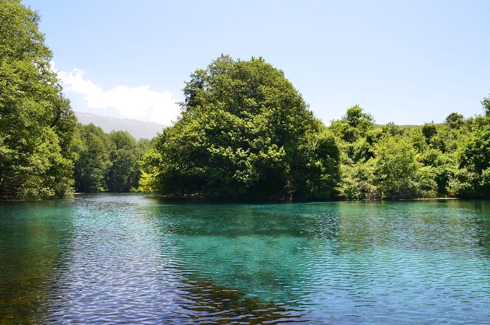 Tree, Nature, Water, River, Summer, Drim Springs, Ohrid