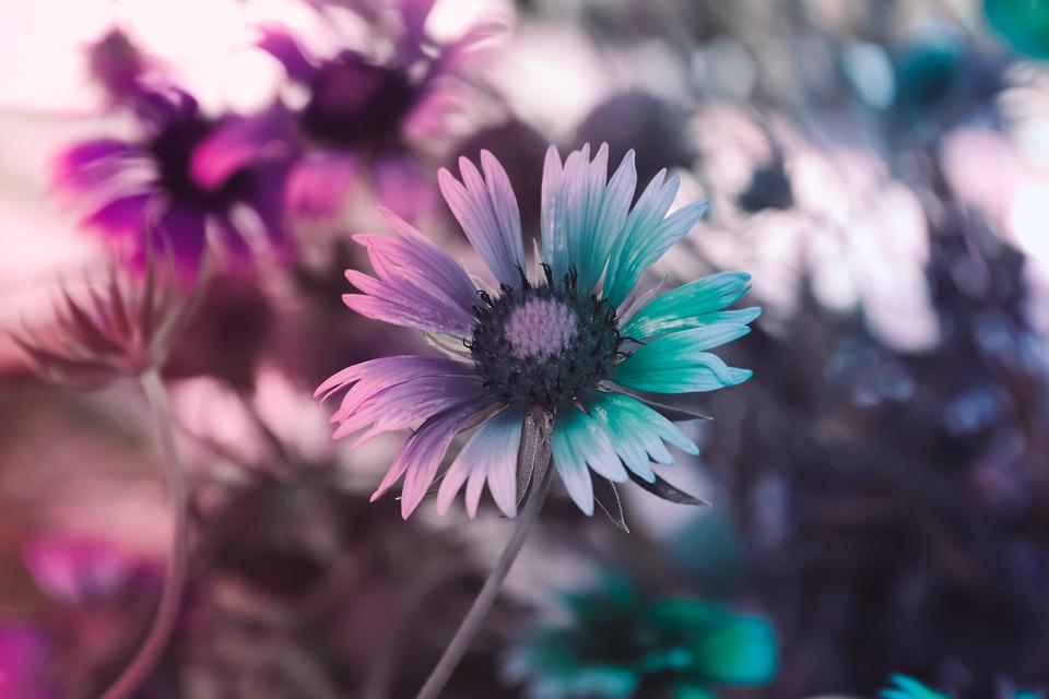 Flower, Nature, Spring, Flowers, Summer, Zen, Plants