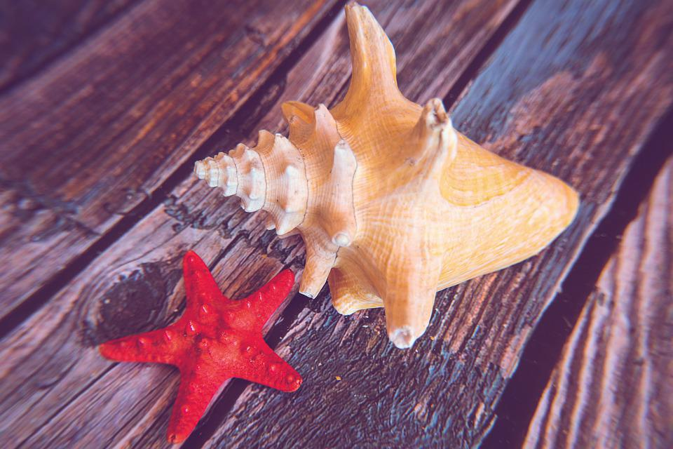 Shell, Starfish, Seashell, Sea, Nature, Coast, Summer