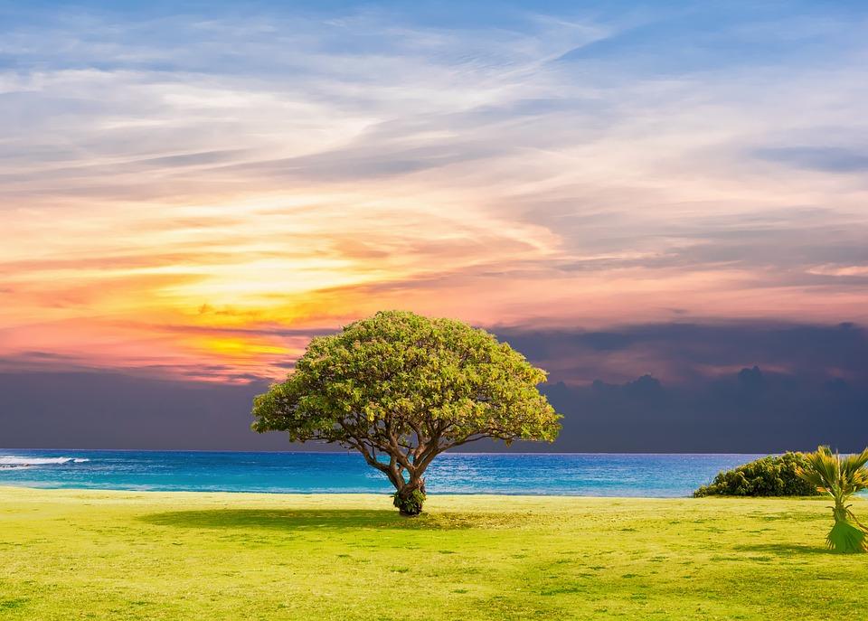 Tree, Sea, Grass, Nature, Ocean, Summer, Landscape, Sun