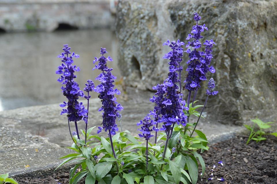 Flowers, Nature, Summer, Garden, Water