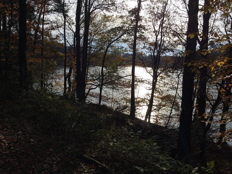 Water, Trees, Nature, Back Light, Autumn, Sun