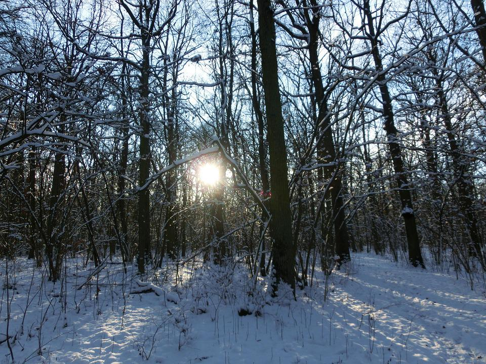 Forest, Sun, Nature, Wintry, Snowy
