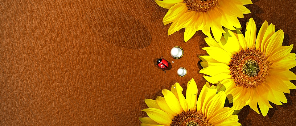 Sunflower, Flowers, Yellow, Ladybug, Nature