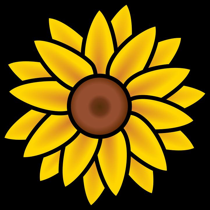 Sunflower, Summer, Nature, Yellow, Petals