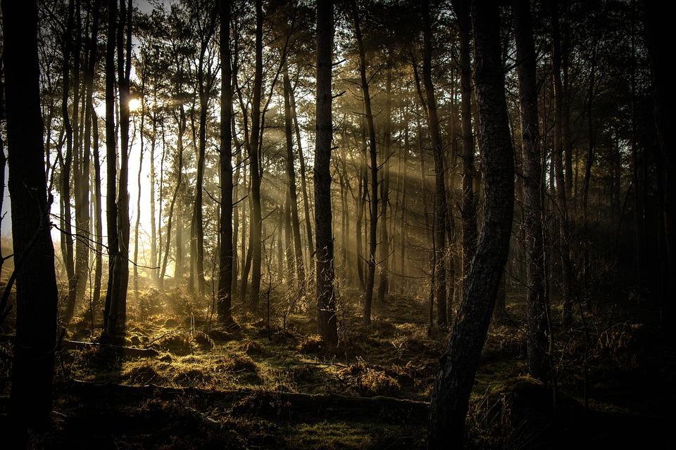 Sunbeam, Forest, Nature, Landscape, Sunlight, Outdoor