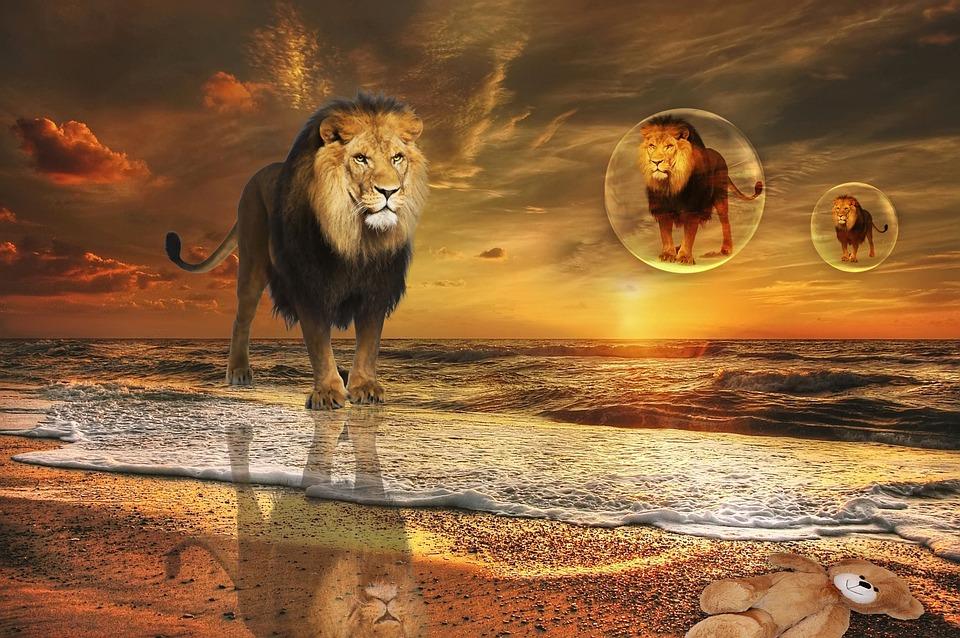 Nature, Sunset, Beach, Animal, Leon, Design, Photoshop