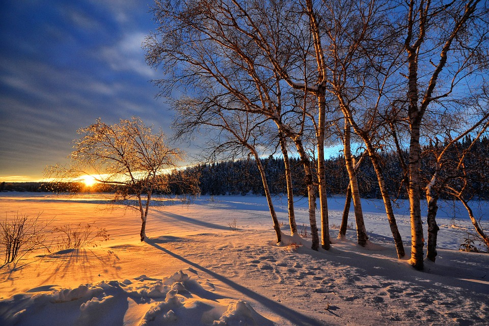 Sunset, Winter, Snow, Cold, Trees, Birch, Nature
