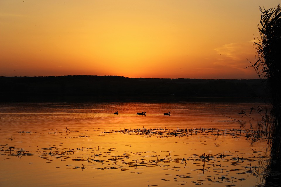 Sunset, Dawn, Nobody, Body Of Water, Nature, Summer