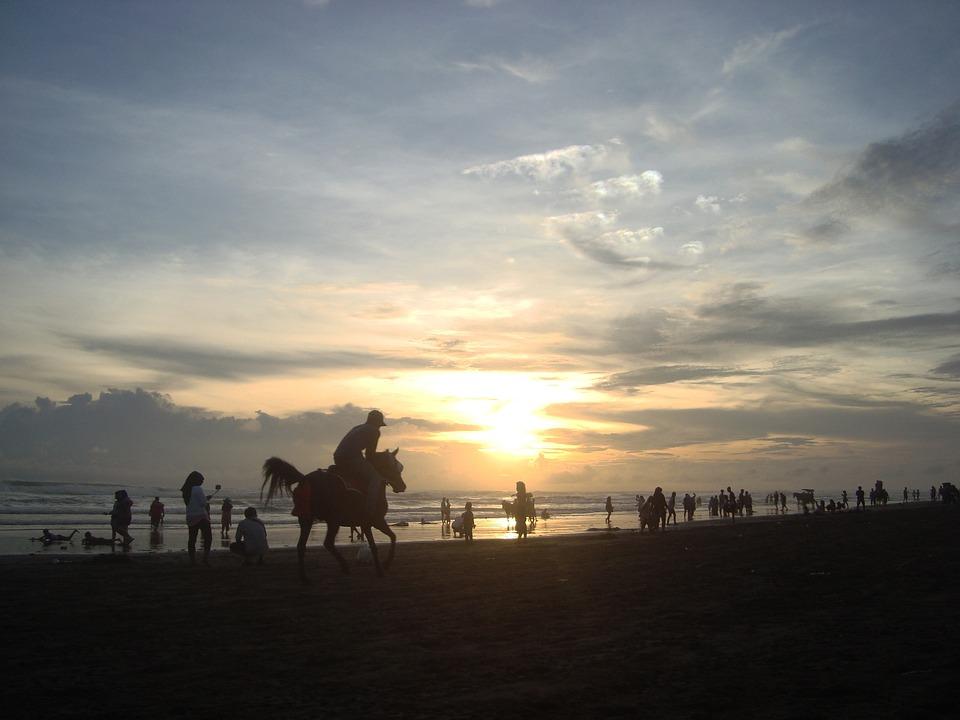 Silhouette, Sunset, Horse, Beach, Nature