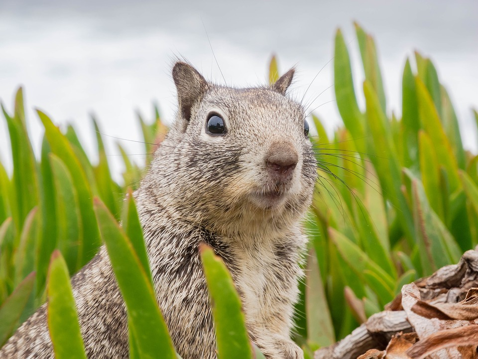 Surprised, Sweet, Animal, Squirrel, California, Nature