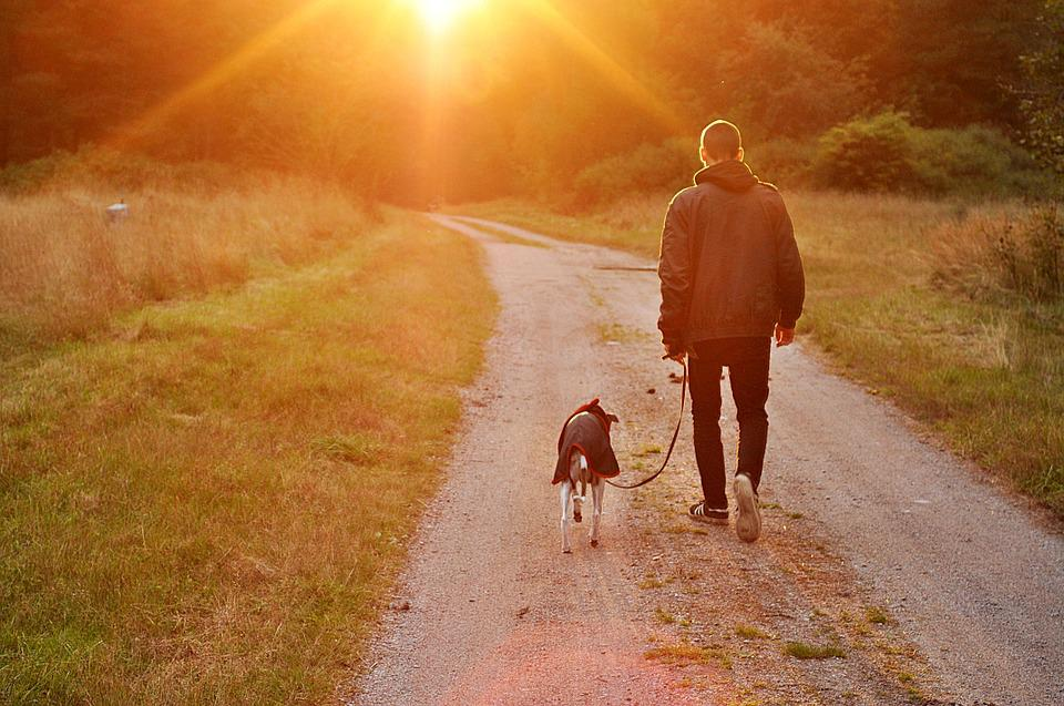Sunset, Dog, Owner, Man, Nature, Sweden
