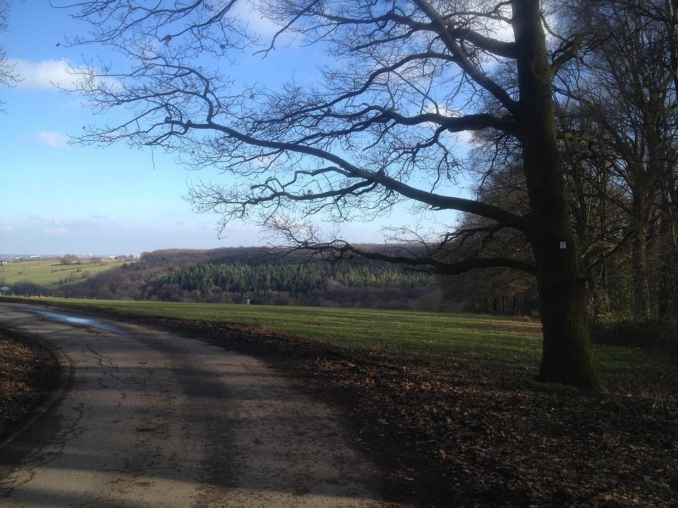 Away, Tree, Nature, Landscape, Swinging