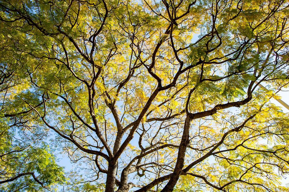 Spring, Sydney, Green, Yellow, Nature, Sky, Outdoor