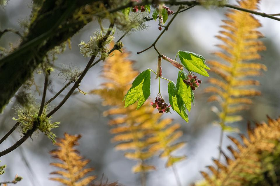 Nature, Tree, Flora, Leaf, Branch, Tacoma