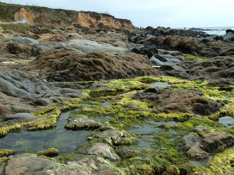 Tafoni, Bean Hollow Beach, Cavernous Weathering, Nature
