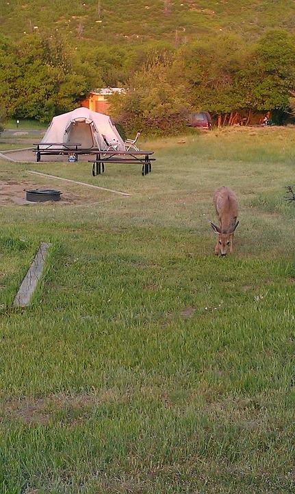 Deer, Camping, Green, Nature, Tent, Camp, Travel