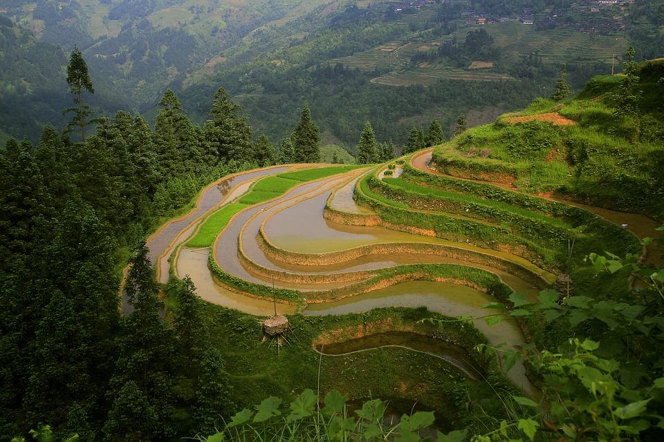 The Scenery, Terrace, Nature, Farm, Green