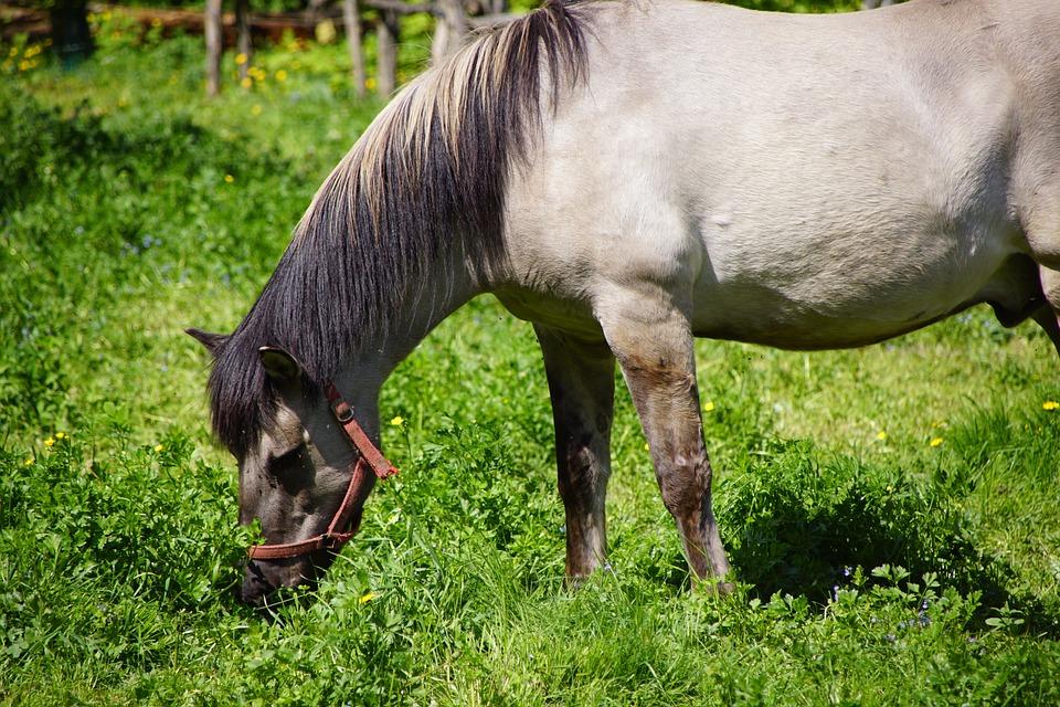 The Horse, Nature, Animals, Horses, Animal