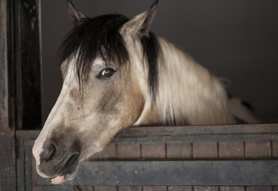 Horse, Animal, The Horses Are, Cute, Nature, Mammal