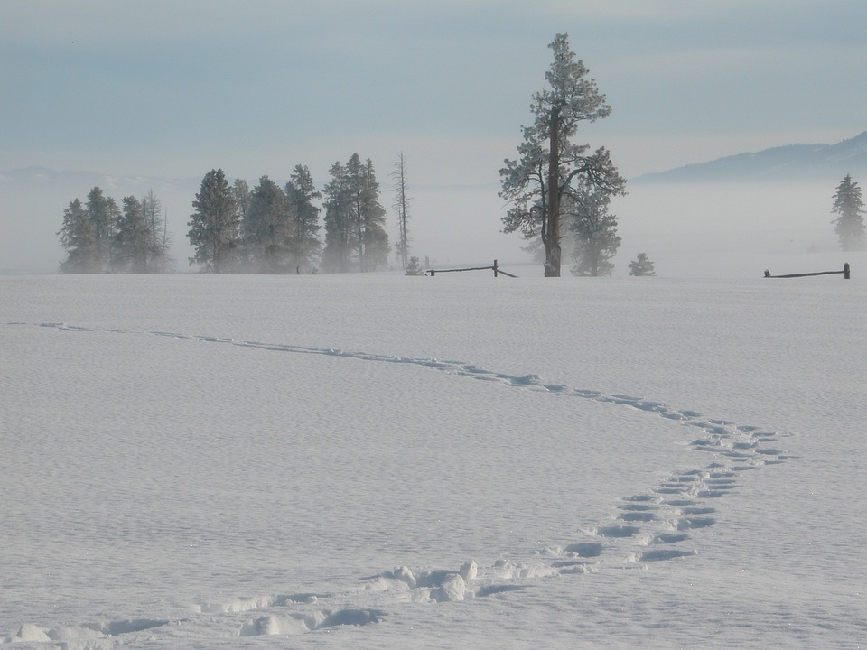 Snow, Winter, Tracks, Idaho, Nature, Landscape