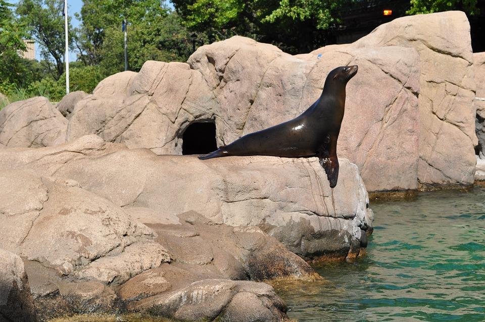 Fur Seal, Zoo, Seal, Nature, Training, Dolphinarium