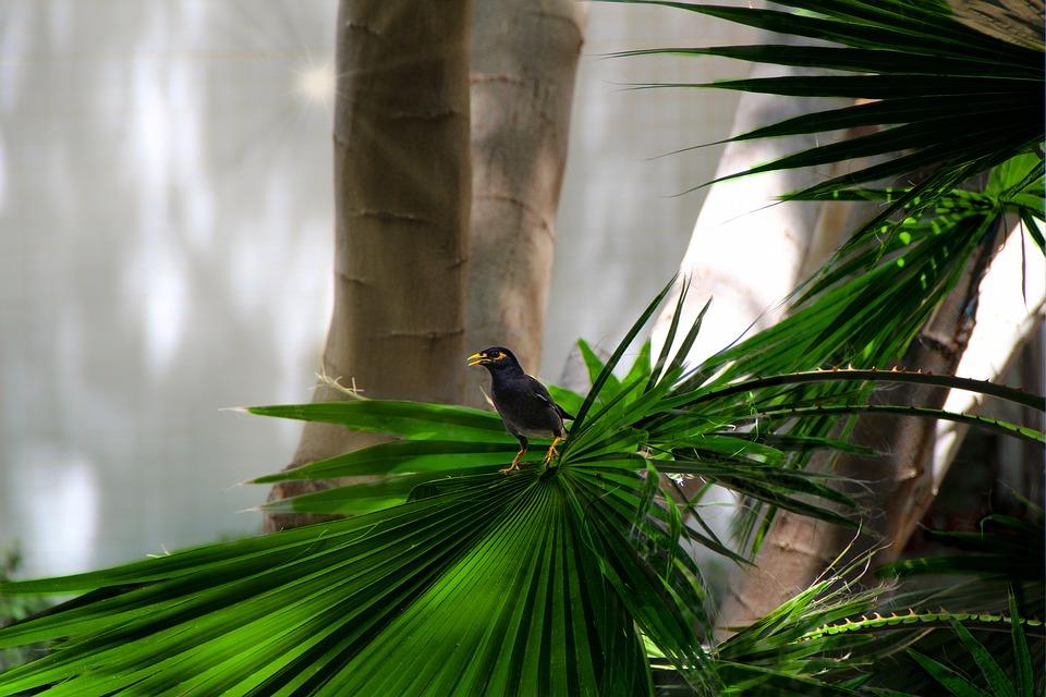 Nature, Animals, Bird, Tree