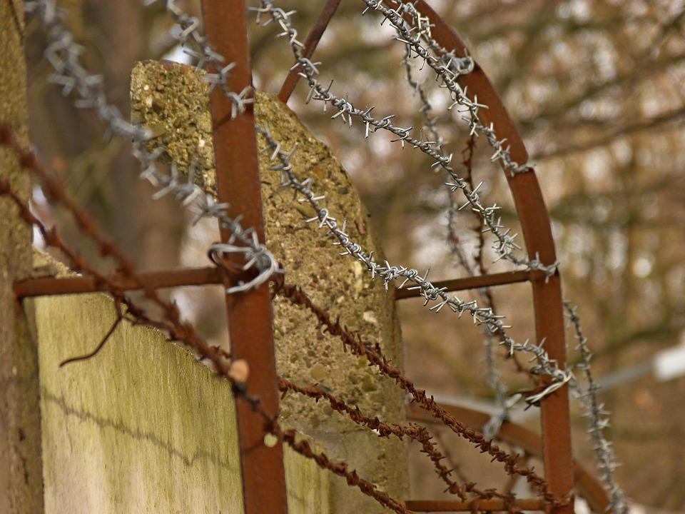 Tree, Nature, The Fence, At The Court Of, Winter, Wire