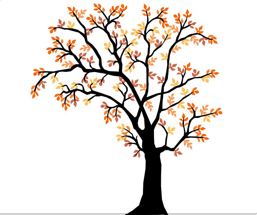 Nature, Tree, Autumn