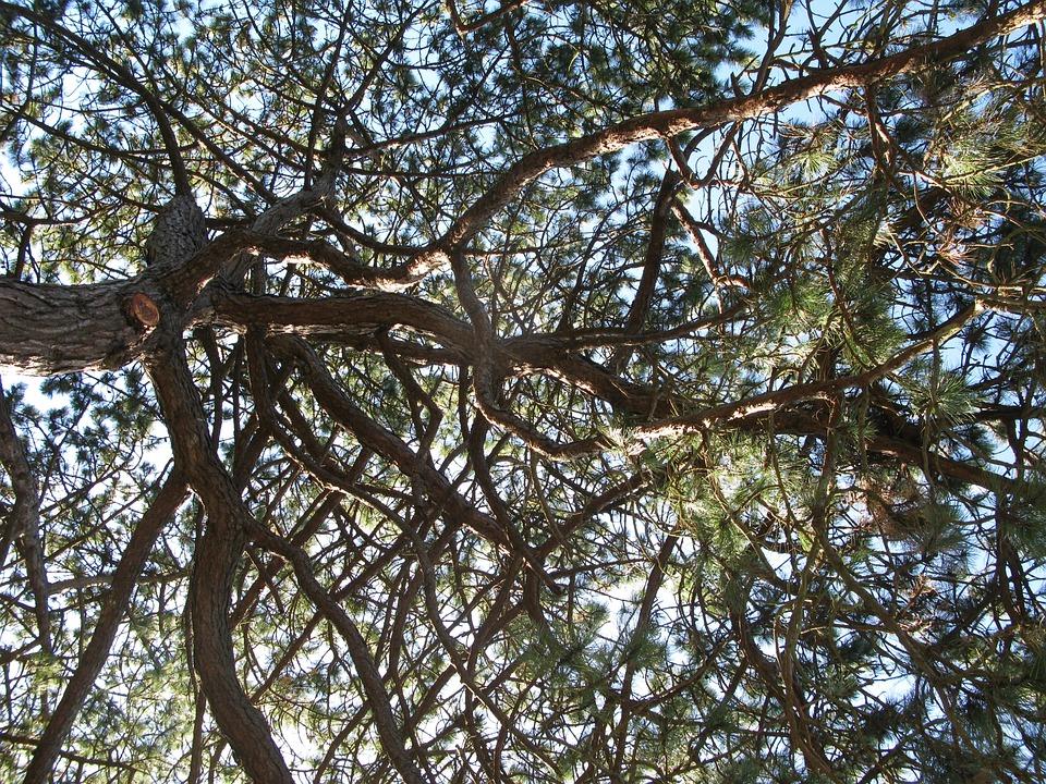Canopy, Nature, Tree