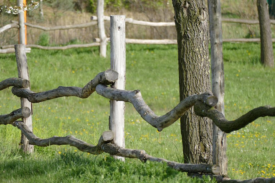 Fence, Nature, Tree, Grass