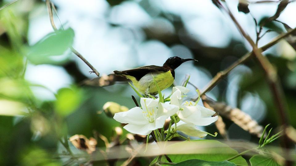 Nature, Leaf, Tree, Outdoors, Flora, Flower, Garden