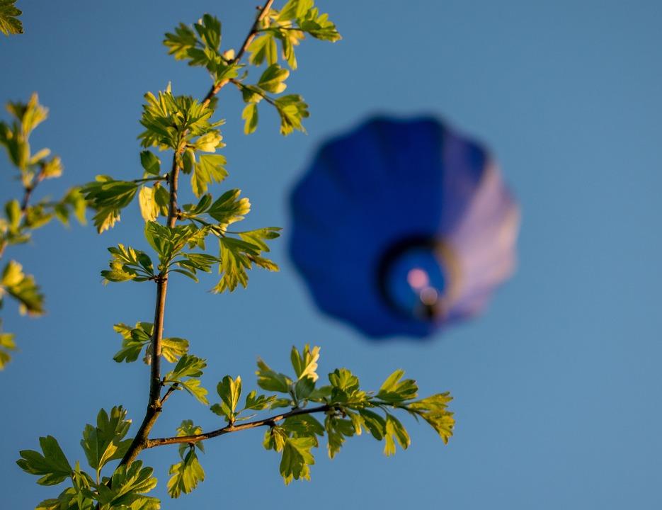Nature, Flora, Flower, Tree, Growth, Hot-air Balloon