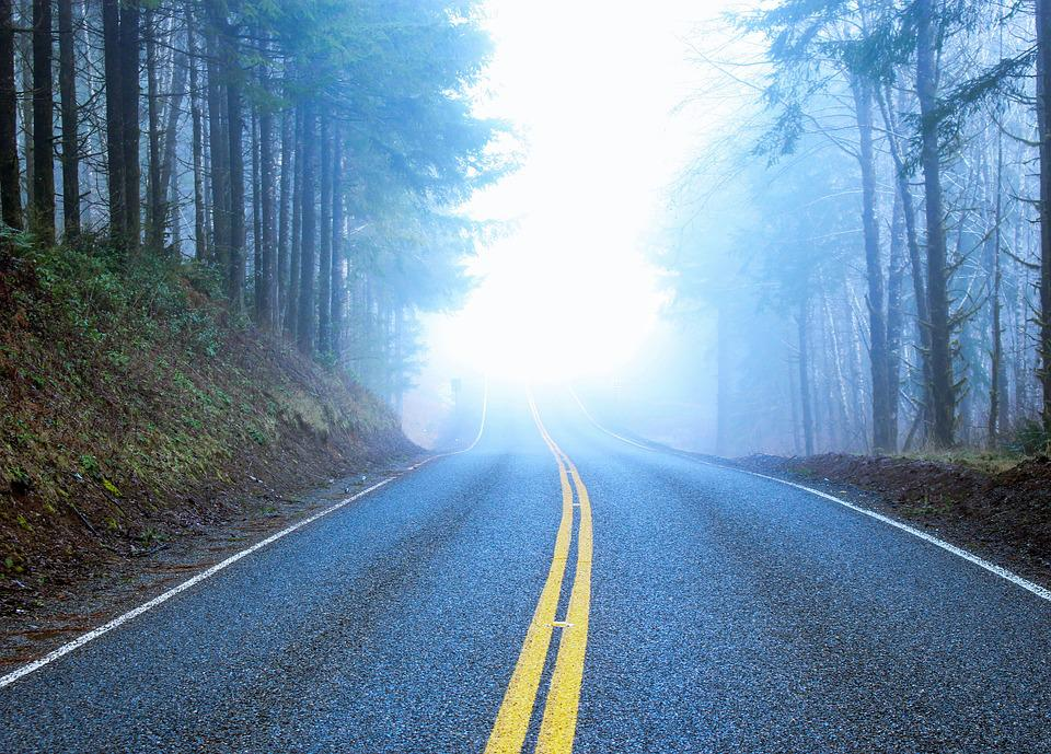Road, Foggy, Forest, Landscape, Tree, Nature