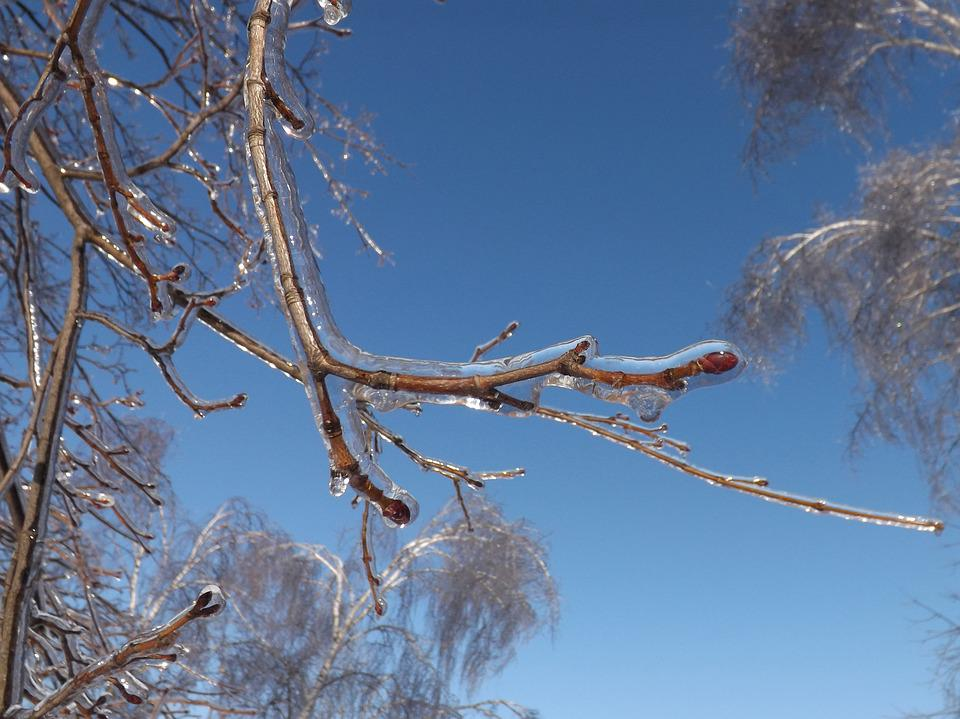 Nature, Landscape, Tree, Branch, Frost, Ice, Spring